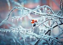 Il racconto dell'inverno Immagine Stock