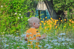 Il ragazzino della bionda costa in un'alta erba densa in cui i camomiles si sviluppano Fotografia Stock Libera da Diritti