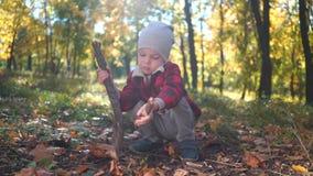 Il ragazzino sta giocando con un ramo di albero che si siede sulla terra con le foglie gialle nel parco di autunno archivi video
