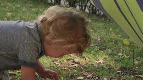 Il ragazzino sta gridando a causa della caduta video d archivio