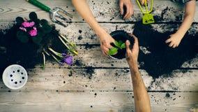Il ragazzo aiuta i genitori a piantare i fiori in vasi E Concetto di giardinaggio stock footage