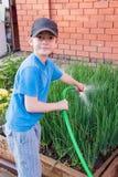 Il ragazzo allegro versa il tubo flessibile di Schnitt delle cipolle verdi Immagini Stock