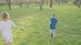Il ragazzo attivo e la ragazza funzionano vicino agli alberi nel parco Bella natura Movimento lento archivi video
