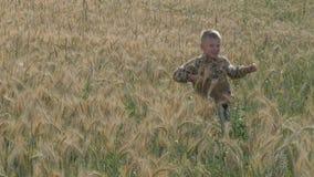Il ragazzo cammina su un campo di grano mangia le spighette archivi video
