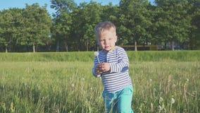 Il ragazzo che va con un fiore bianco del dente di leone in sua mano archivi video