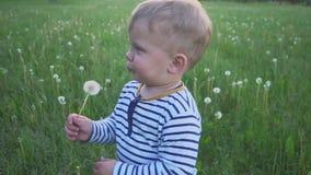 Il ragazzo che va con un fiore bianco del dente di leone in sua mano stock footage