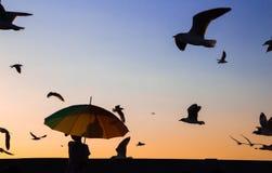 Il ragazzo con gli uccelli fotografie stock