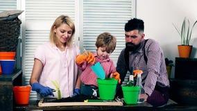 Il ragazzo, con i suoi genitori, versa la terra con una pala nei vasi per piantare i fiori loro Concetto di video d archivio