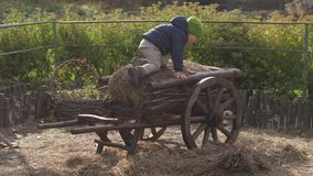 Il ragazzo del bambino scala su un carretto con fieno Azienda agricola 4K video d archivio