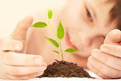 Il ragazzo e la pianta. Immagine Stock