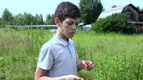 Il ragazzo mangia una fragola stock footage