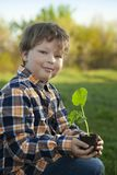 Il ragazzo nel giardino ammira la pianta prima della piantatura Germoglio verde in mani dei bambini immagini stock libere da diritti