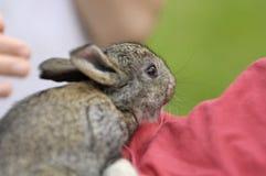 Il ragazzo pets il coniglietto Immagini Stock