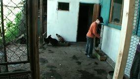 Il ragazzo sta alimentando i polli nella gabbia video d archivio
