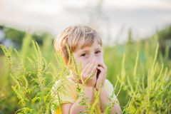 Il ragazzo starnutisce a causa di un'allergia all'ambrosia Fotografie Stock Libere da Diritti