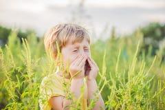Il ragazzo starnutisce a causa di un'allergia all'ambrosia Immagini Stock