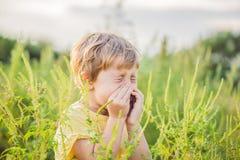 Il ragazzo starnutisce a causa di un'allergia all'ambrosia Immagine Stock