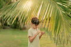 Il ragazzo sull'erba verde che tiene un ramo della palma Fotografie Stock