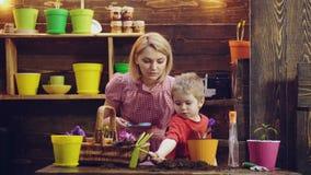 Il ragazzo sveglio del bambino aiuta sua madre a preoccuparsi per le piante Madre ed suo figlio impegnati nel giardinaggio Concet stock footage