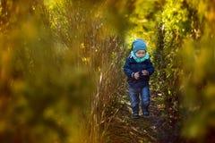 Il ragazzo va fra i cespugli verdi Fotografie Stock Libere da Diritti