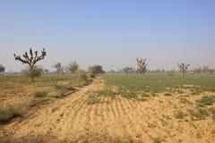 Il Ragiastan sabbioso che coltiva paesaggio Immagini Stock Libere da Diritti