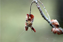 Il ragno Fotografia Stock Libera da Diritti