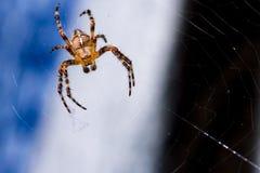 Il ragno attende sul suo Web Immagini Stock Libere da Diritti