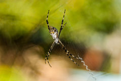 Il ragno di X Fotografia Stock