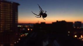 Il ragno fila il web sopra Cleveland Ohio video d archivio