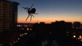 Il ragno fila il web sopra Cleveland Ohio stock footage