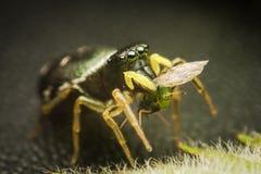 Il ragno mangia la sua preda Immagini Stock Libere da Diritti
