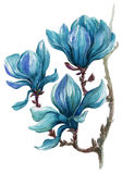 Il ramo brillantemente dipinto della magnolia fiorisce su un fondo bianco Fotografie Stock