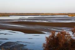 Il ramo del fiume nel deserto Immagini Stock