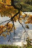 Il ramo dell'acero con molti va un giorno soleggiato di autunno Immagine Stock Libera da Diritti