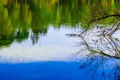 Il ramo dell'albero riflesso in acqua Fotografie Stock Libere da Diritti