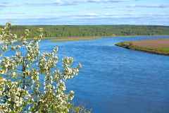 Il ramo della mela sboccia su un fondo del fiume Fotografia Stock