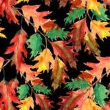 Il ramo della quercia, acquerello, modella senza cuciture Fotografia Stock Libera da Diritti