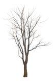 Il ramo di albero Immagini Stock