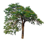 Il ramo di albero Immagini Stock Libere da Diritti