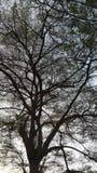 Il ramo di albero in priorità alta scura illustrazione vettoriale