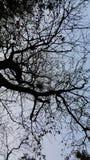 Il ramo di albero in priorità alta scura immagine stock