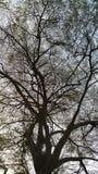 Il ramo di albero in priorità alta scura fotografia stock libera da diritti
