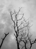 Il ramo di albero senza c'è ne va fotografia stock libera da diritti