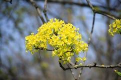 Il ramo di un albero immagini stock libere da diritti