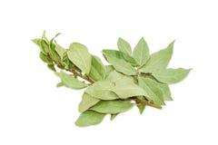 Il ramo di un alloro e vari hanno asciugato le foglie della baia Fotografia Stock Libera da Diritti