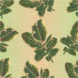 Il ramo vermiglio di ficus elastica senza cuciture di struttura e le foglie variopinte isolati su un fondo bianco colorano l'illu Immagine Stock