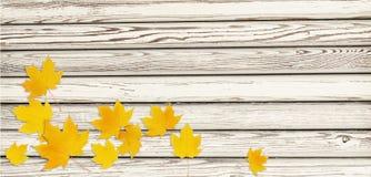 Il ramoscello dell'acero di autunno con giallo lascia in una disposizione d'angolo sopra Immagine Stock