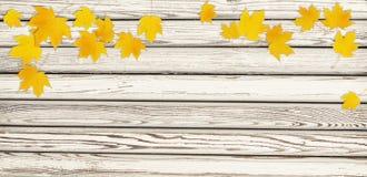 Il ramoscello dell'acero di autunno con giallo va su legno Fotografia Stock Libera da Diritti