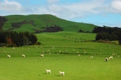 Il ranch verde Immagine Stock