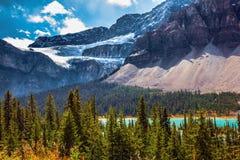 Il ranuncolo del ghiacciaio sopra il fiume dell'arco in montagne fotografie stock